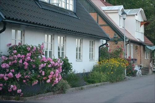 """Jag avundas verkligen Skånes klimat. Vilken växtlighet och fantastiskt vackert. Jag är en """"växtgalning"""" så jag blir lyrisk när jag ser sånt här... MEN chowchowuppfödning och trädgård är inte den bästa kombinationen har jag märkt...."""