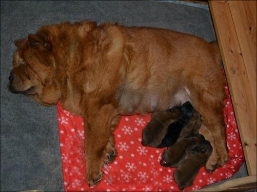 Carlene och sina 5 små valpar