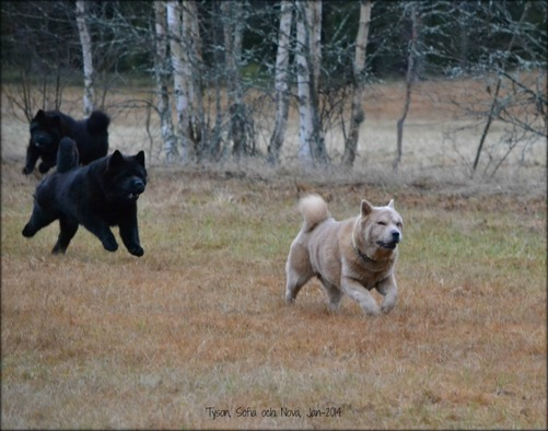 """Tyson, Sofia och Nova. 120 kilometer i timmen """"non stop"""". Det är liksom deras grej."""