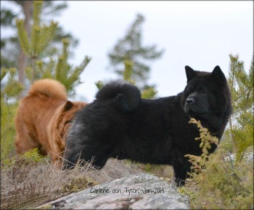 Carlene och Tyson långt uppe i Karlsängsskogarna.