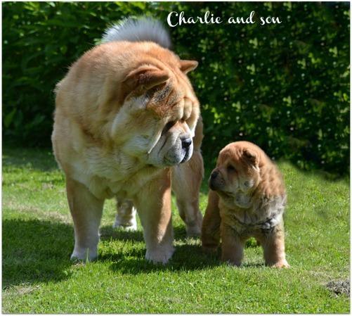 Pappa Charlie har varit på besök i dag. På bilden tillsammans med Ludde