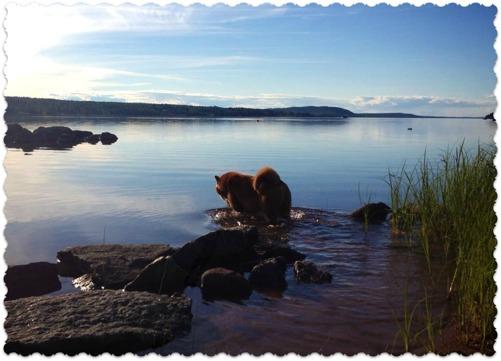 Sigge vid mashavet - Siljan