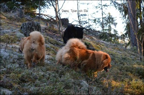Donna, Tyson och Ella