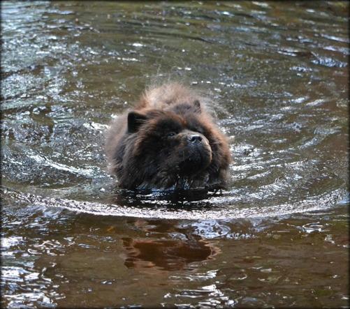 Priscilla som vi vet att hon älskade att vara - i vattnet.