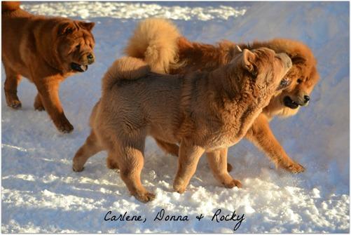 Carlene, Rocky och Donna.
