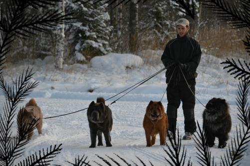 Husse med Nova(från vänster), Dylan, Carlene och Priscilla.