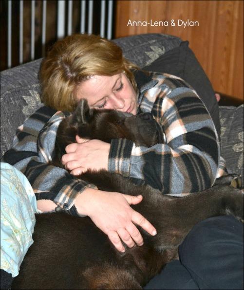 """Alla våra hundar hur gamla de än är blir väldigt """"mammasjuka"""" ibland och ska ligga nära och bli ompysslade. Detta är lördagkväll när man ska försöka titta på lite tv då ville Dylan ha lite kärlek så jag fick ha honom i famnen bra länge. De är för goa de där 4-benat älsklingarna man har."""