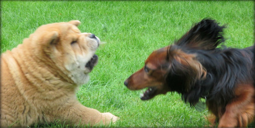Ludde leker med en av de bästa vännerna