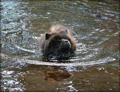 Priscilla badar sig själv.