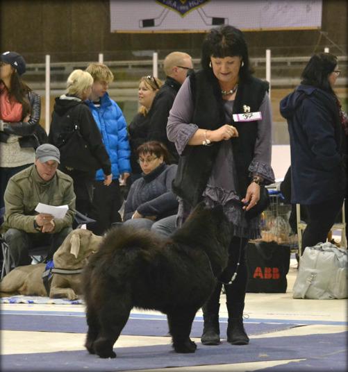 Så fina så till och med domaren tyckte att de matchade varandra så bra i ringen. Anastacia har verkligen mognat. Förra året på samma utställning så stod den här hunden mer på bakbenen än på alla fyra.