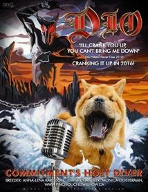 Cool bild av Commitment's Holy Diver aka Dio. Dio finns hos Monica Oosterman, Pinchou kennel i Kanada.