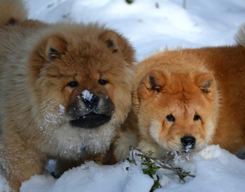 Bror och syster - Roffe och Lucia