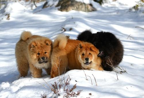 Roffe, Lucia och Hera