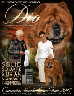 Ch Commitment's Holy Diver aka Dio was No: 1 chow in Canada in 2017. Owner: Monica Oosterman, Ontario