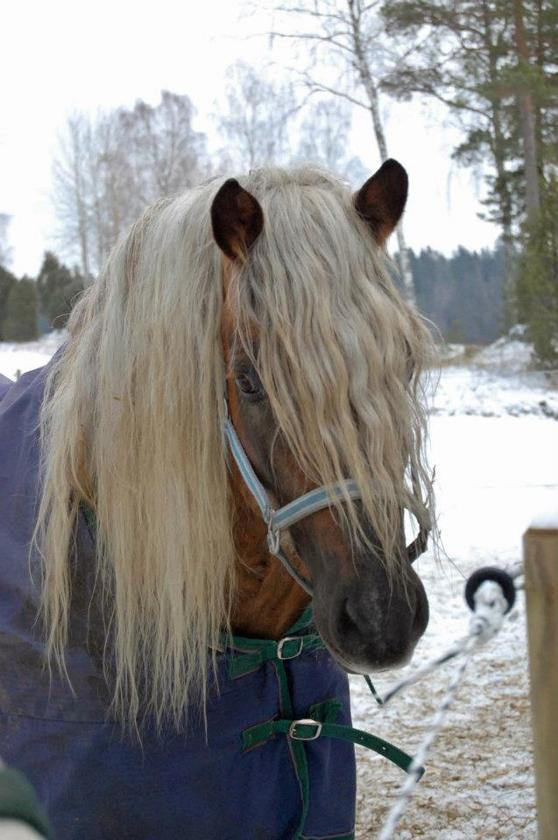 Hittade den här fina bilden på Toby som är tagen för någon vinter sedan. Gullegubbe:)