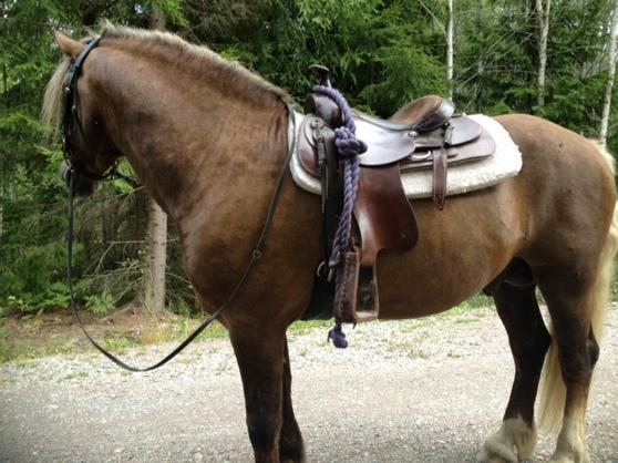 Skogsmulle häst!