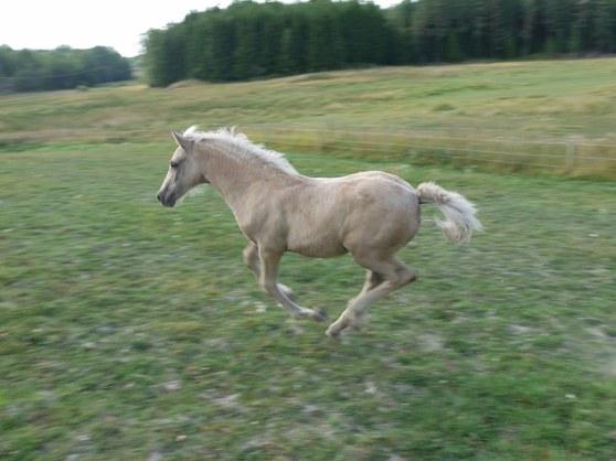 Spring i benen på Penny:)