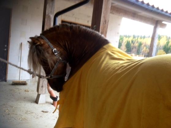 Toby med sin morgonrock. Han vill själv klä på sig:)!