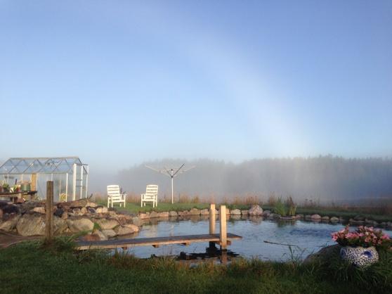 Regnbåge över Koi dammen
