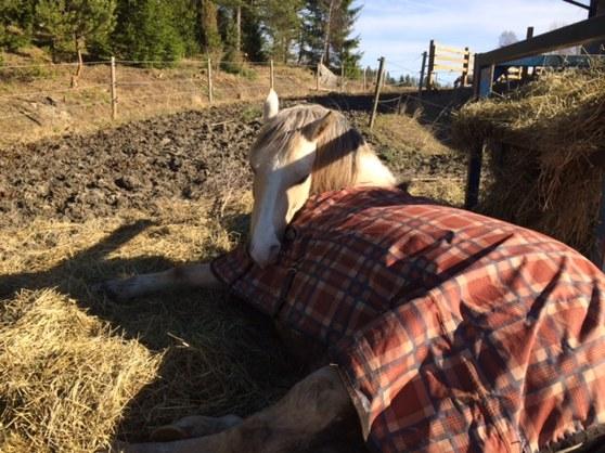 Terackie Ivory ligger och myser i silaget och tar en liten tupplur i solen!