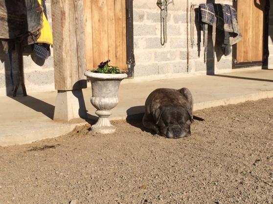 Ciras njuter i solen!