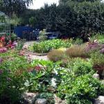 Trädgård.5