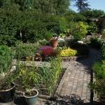 Trädgård.7