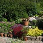 Trädgård.8