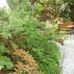 Skön sittplats bland rhododendron och rosen Venus Pendula i bakgrunden