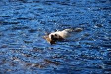 Skarsjön, Ize simmar