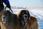 2012-12-02 årets kalla julpromenad -18 hos Garplyckans