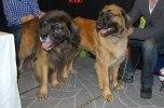 2011-01-09  My Dog, Max och Niike