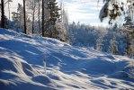 2011-01-13 Till och med ett kalhygge är vackert...