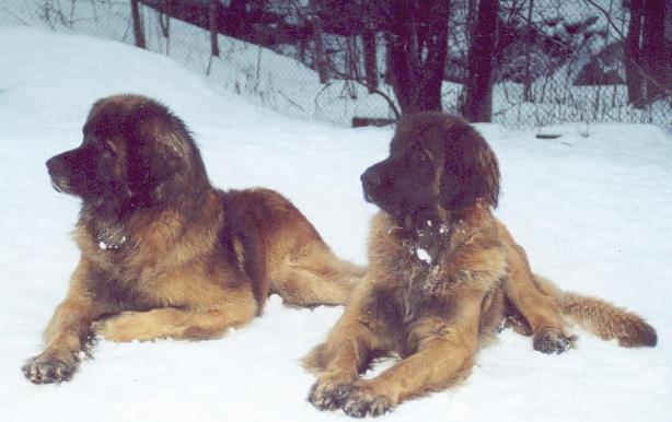 Morfar Dusko och mormor Vina