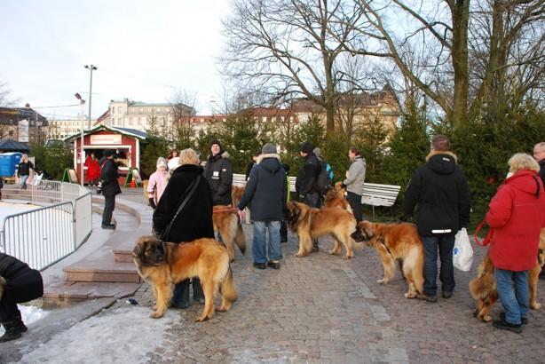Fika/glögg-paus vid Bältesspännarparken