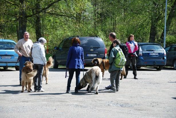 Samling på parkeringen framför Härskogens friluftsgård. Åtta tvåbenta och sex fyrbenta.