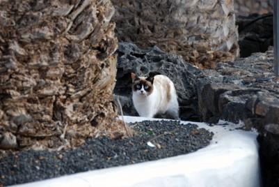 Hotellets katter var välskötta, de matades varje dag med riktig kattmat bakom hotellet där de hade tillgång till vaten och skydd.