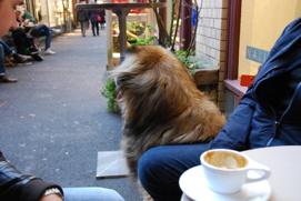 Nelson spanar efter hundflickor