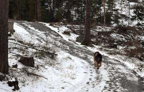 Max undrar var all hans skog tar vägen