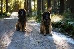 2011-02-03 Max och Nelson