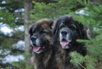 2011-02-26 Nelson och Max