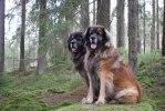 2011-02-26 Max och Nelson