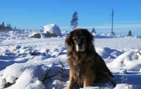 Nelson trivs i snön.