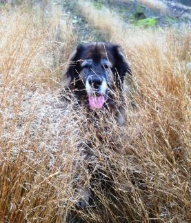 Nelson i gräset
