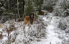 Fortfarande lite snö i skogen.