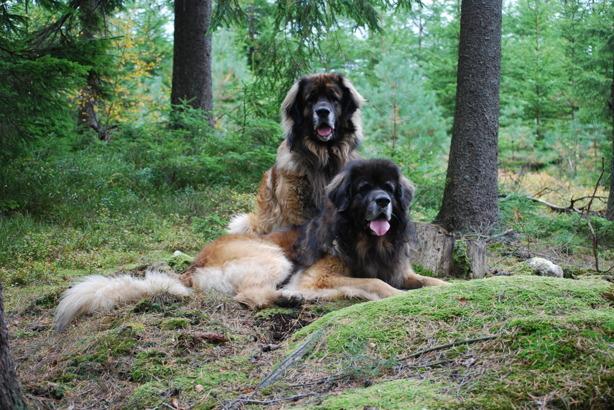 Max och Nelson 2010
