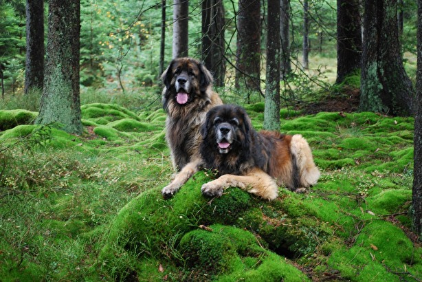 Max och Nelson