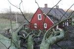 Foto: Dennis Meisner -  Träd rammade villa i Röddinge