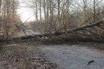 Foto: Dennis Meisner - Flera träd föll över vägarna på flera håll i länet