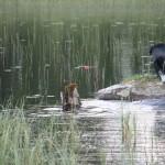 Flatshow jakt 2013 079
